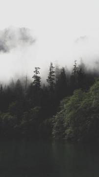 森林湖雾,锁屏图片,高清手机壁纸,风景-好运图库