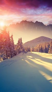 阳光穿过冬天的松树,锁屏图片,高清手机壁纸,风景-好运图库