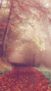 秋天森林公路颜色,锁屏图片,高清手机壁纸,风景-好运图库
