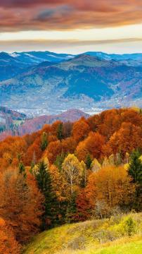 炫彩的森林颜色,锁屏图片,高清手机壁纸,风景-好运图库