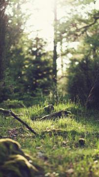 绿色森林的光线,锁屏图片,高清手机壁纸,风景-好运图库