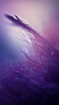 露水下降紫色色调,锁屏图片,高清手机壁纸,风景-好运图库