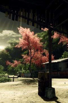 屋外的樱花,锁屏图片,高清手机壁纸,风景-好运图库