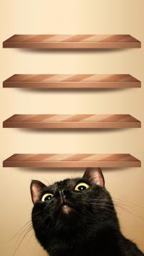 木架旁的好奇猫高清手机壁纸-好运图库
