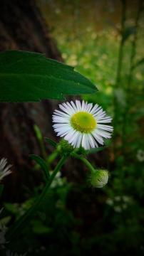清新的小菊花,锁屏图片,手机壁纸,植物-好运图库