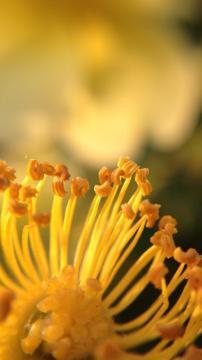 花蕊沁香,锁屏图片,手机壁纸,植物-好运图库