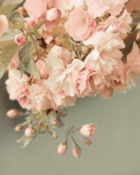 陌上花开-锁屏图片-手机壁纸-植物-好运图库