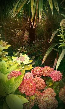 淡雅花卉,锁屏图片,手机壁纸,植物-好运图库