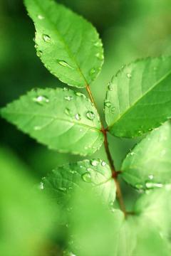 漂亮绿色植物风景,锁屏图片,手机壁纸,植物-好运图库