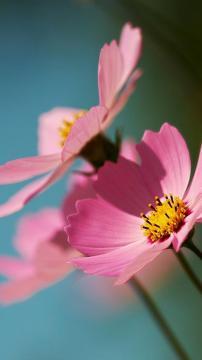 花仙子,锁屏图片,手机壁纸,植物-好运图库