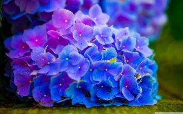 唯美的自然植物壁纸-好运图库