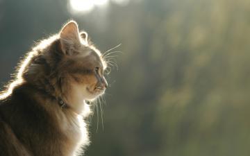 萌猫高清桌面壁纸-好运图库