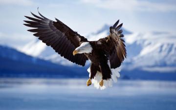 老鹰Eagles高清动物壁纸-好运图库