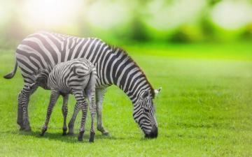 动物世界宽屏壁纸-好运图库