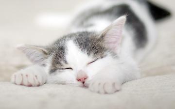 可爱的小猫壁纸桌面-好运图库