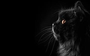 黑猫高清动物壁纸下载-好运图库