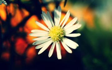 白色花朵摄影-好运图库
