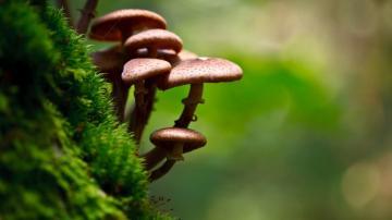 绿叶与蘑菇摄影-好运图库