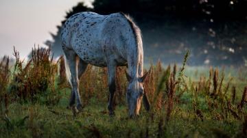 绿色草地上的马-好运图库