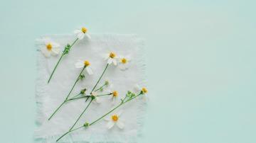 白色野花摄影-好运图库