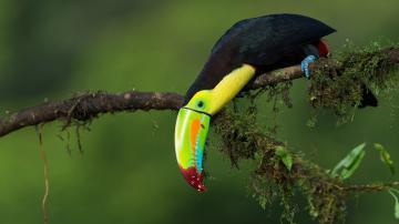 树枝上彩色鹦鹉-好运图库