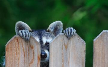 木板后可爱小狗-好运图库