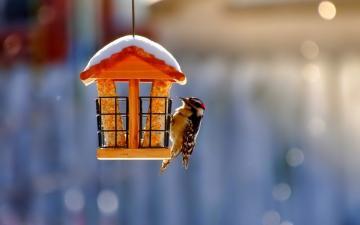 小屋上飞鸟-好运图库