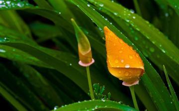 雨天花苞摄影-好运图库
