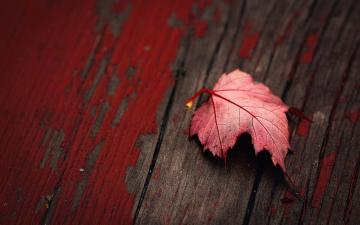 木板上红色落叶-好运图库