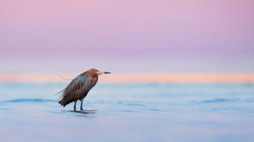 海滩上一只鸟-好运图库
