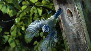 蓝色小鸟-好运图库