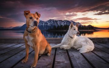 湖边的小狗图片-好运图库