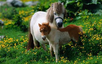 草地花朵与马-好运图库