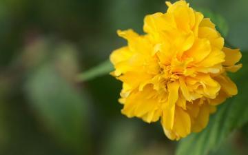 绿叶花朵摄影-好运图库