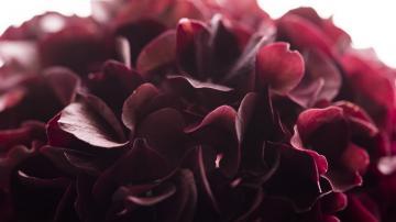 红色鲜花花朵-好运图库