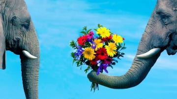 求爱的大象-好运图库