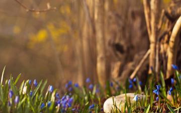 绿色草地花朵与鹅卵石-好运图库