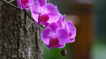 粉色鲜花花朵摄影-好运图库