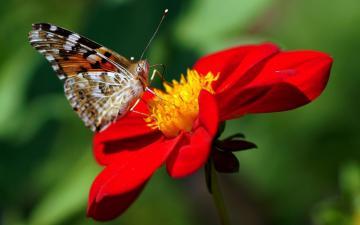 红色花朵与蝴蝶-好运图库