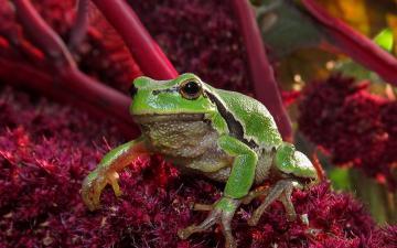 树枝上的花朵与青蛙-好运图库