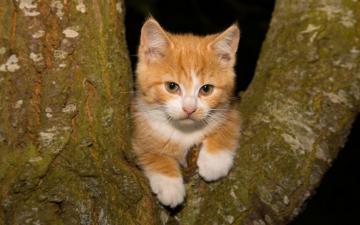 树枝上的小猫-好运图库