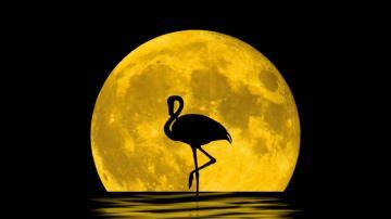 月亮河流与火烈鸟-好运图库