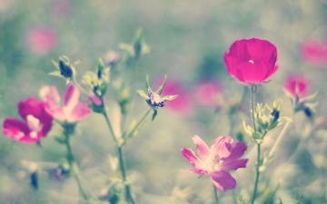 彩色鲜花花朵摄影-好运图库