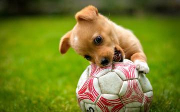 草地上的宠物与玩具-好运图库