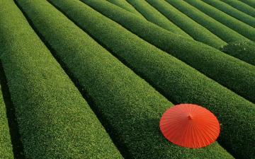 乡村绿色茶园-好运图库