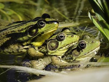 高清青蛙摄影-好运图库