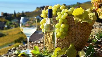 水果葡萄与香槟-好运图库