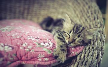 睡觉的小猫-好运图库