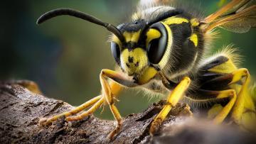 树枝上的黄蜂