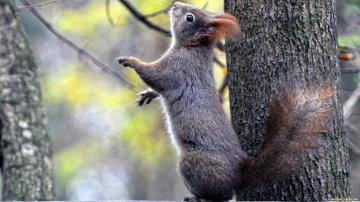 树木站立的松鼠
